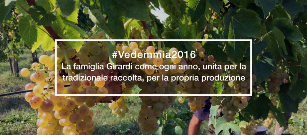 trattoria-alla-buona-vite-cantina-girardi-vendemmia-2016
