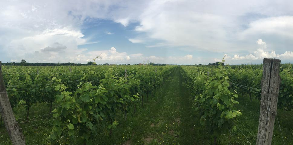 Azienda-vinicola-Girardi-produzione-e-vendita-ad-Aquileia-e-Grado-di-vini-friulani